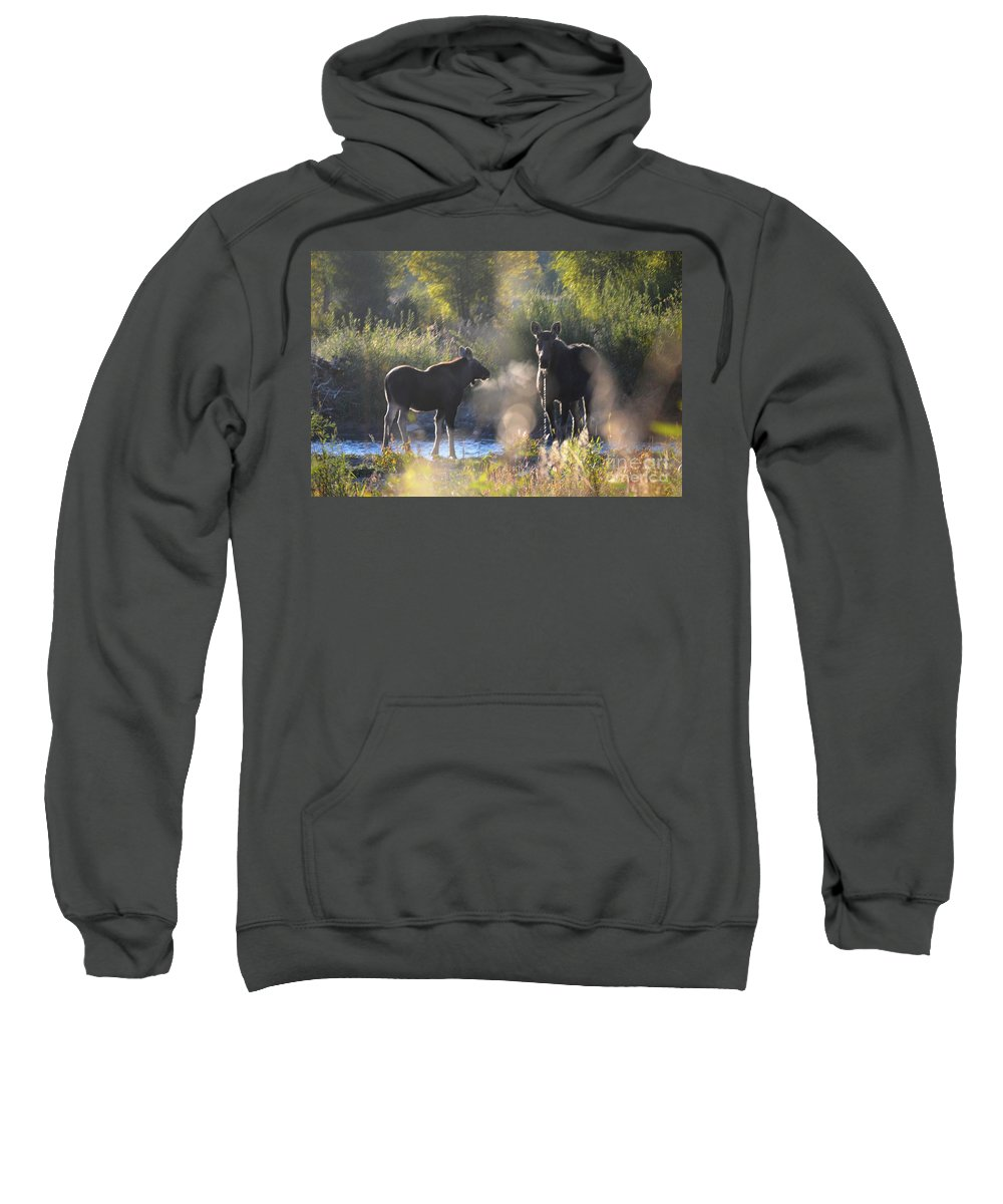 Moose Sweatshirt featuring the photograph The Look by Deanna Cagle