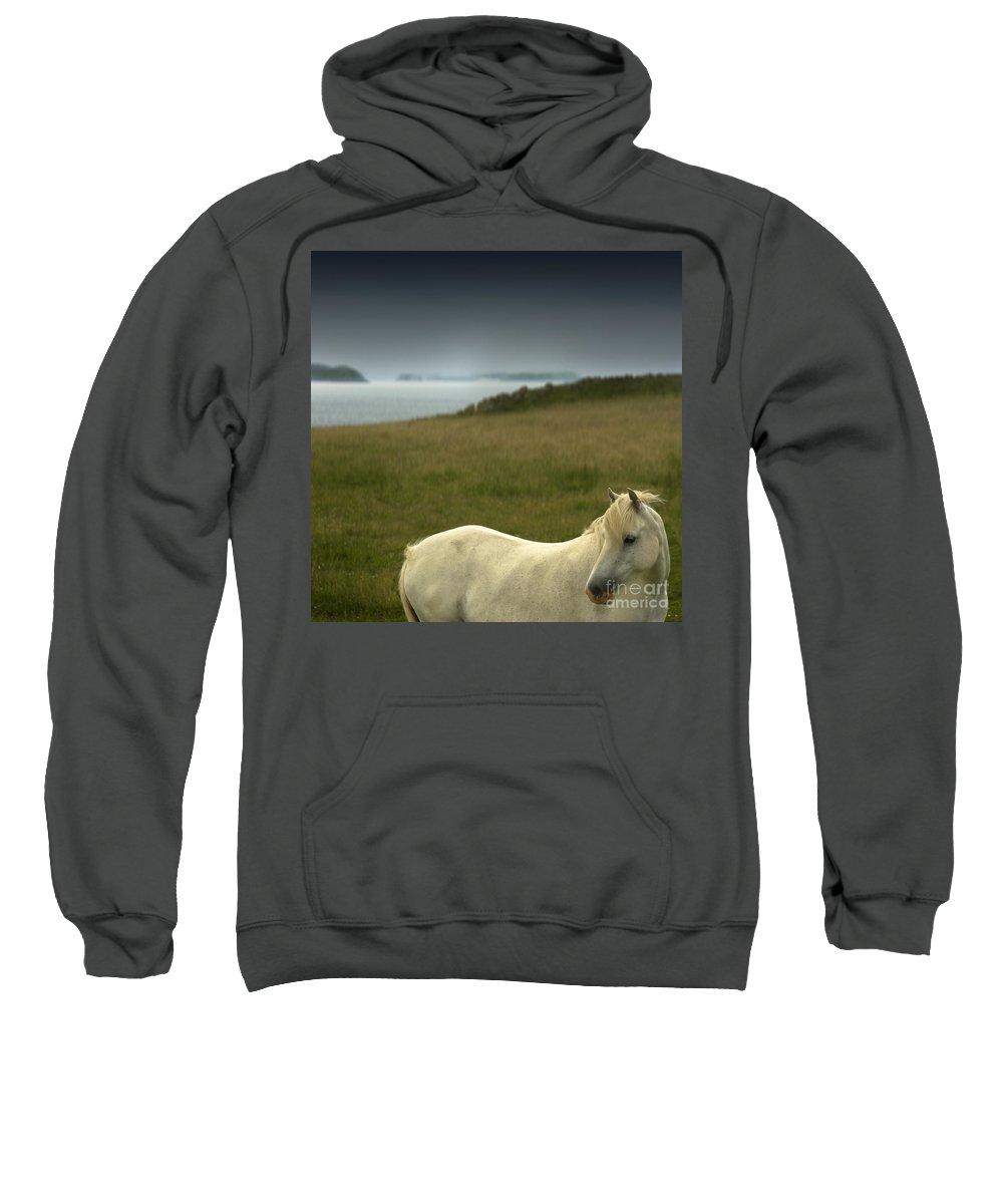 Welsh Pony Sweatshirt featuring the photograph The Welsh Pony by Angel Ciesniarska