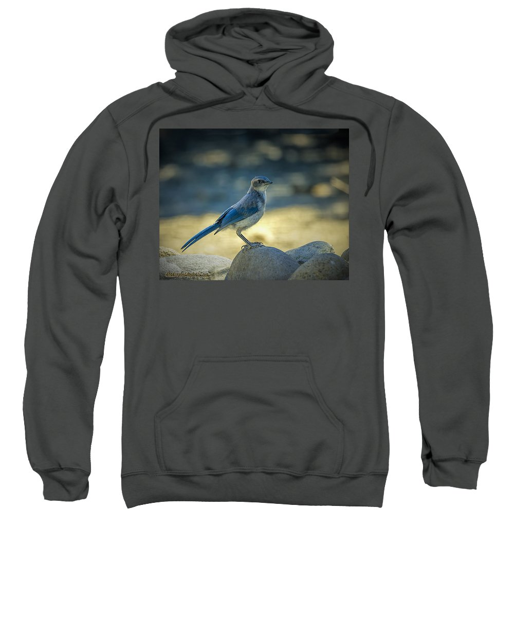 Blue Jay Sweatshirt featuring the photograph Western Scrub Jay Thief by LeeAnn McLaneGoetz McLaneGoetzStudioLLCcom