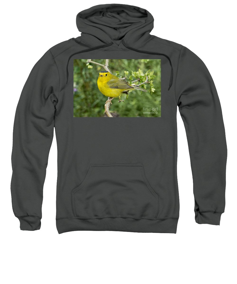 Wilson's Warbler Sweatshirt featuring the photograph Wilsons Warbler by Anthony Mercieca