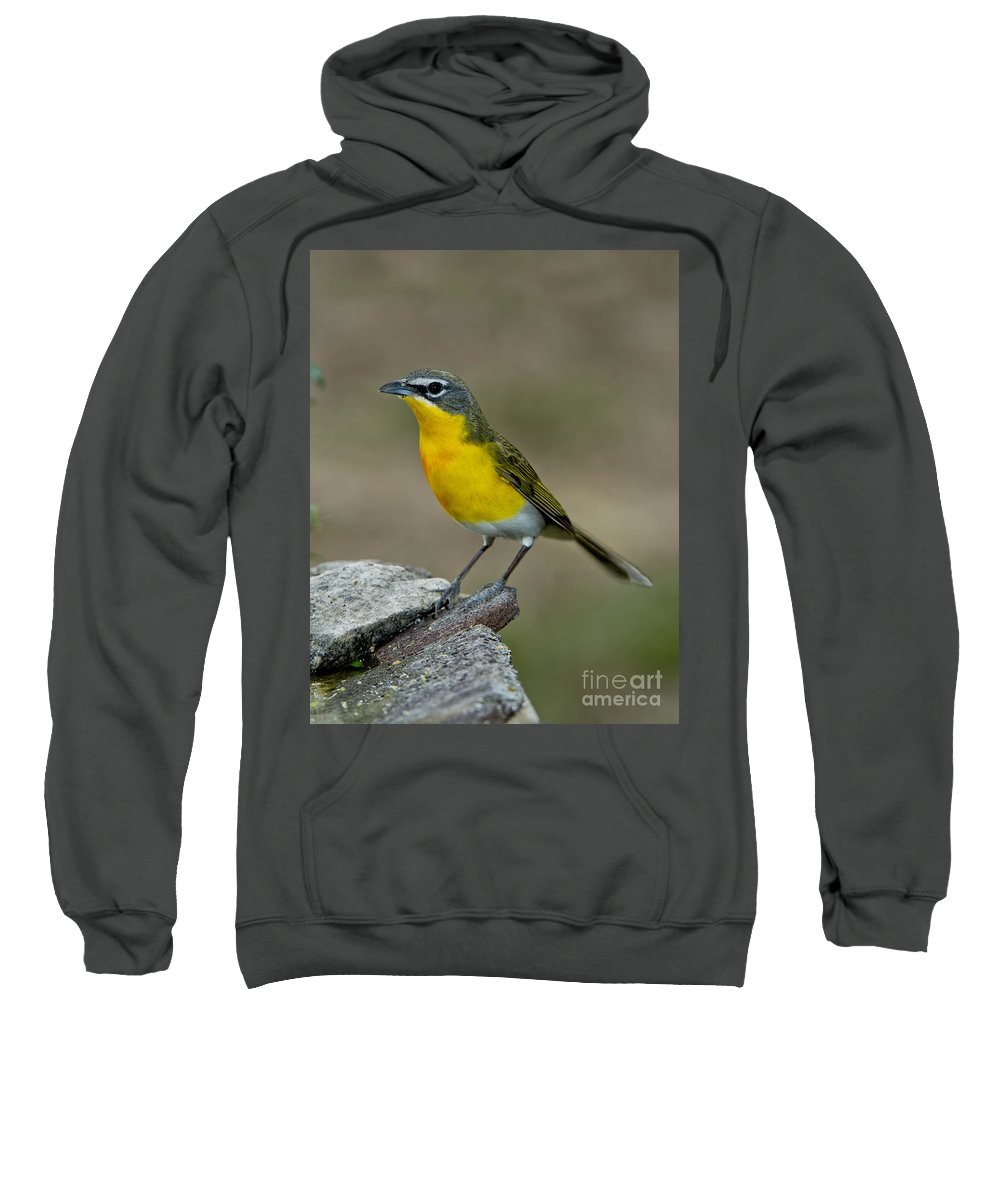 Yellow-breasted Chat Sweatshirt featuring the photograph Yellow-breasted Chat by Anthony Mercieca