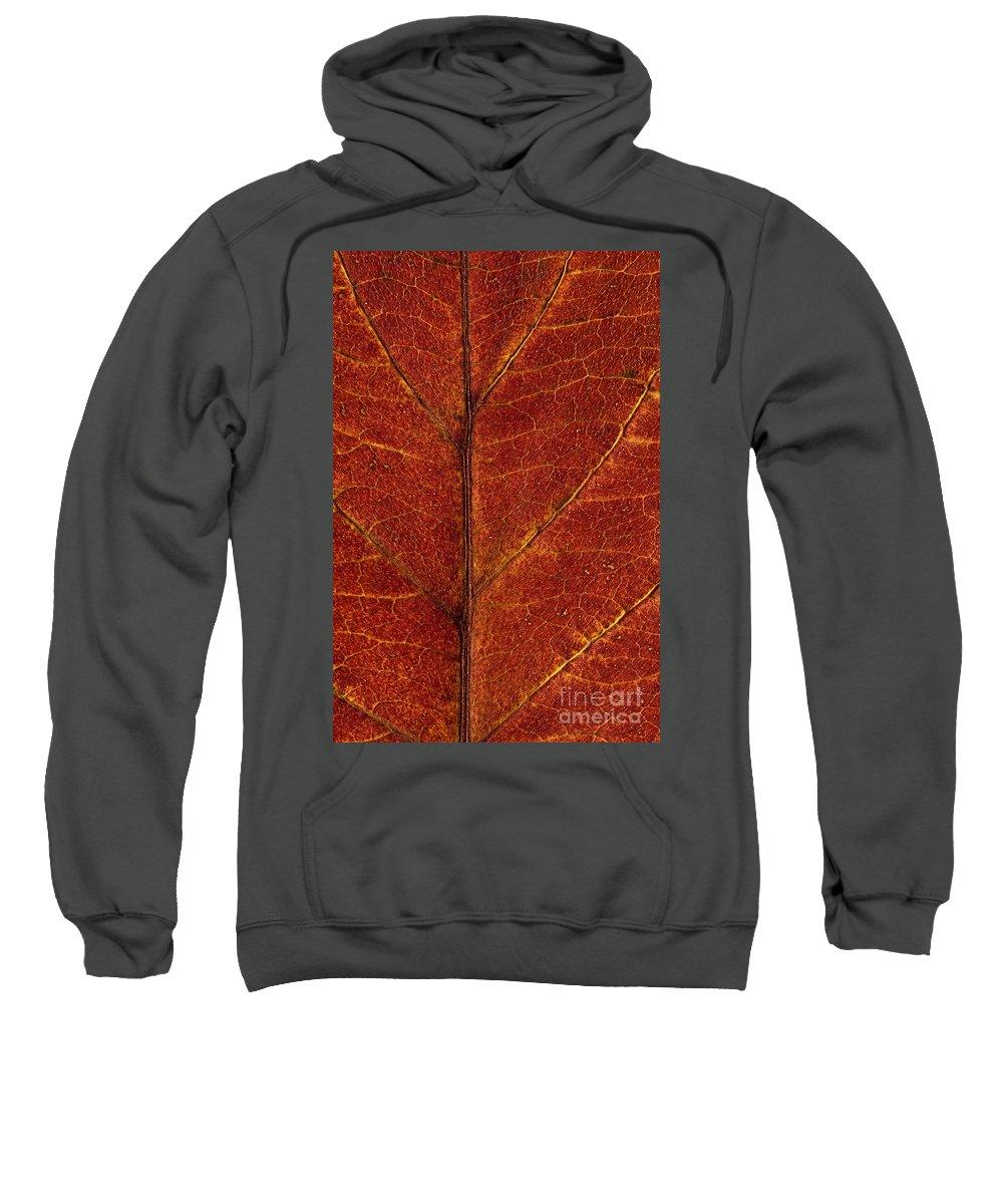 Pacific Dogwood Sweatshirt featuring the photograph Dogwood Leaf Backlit by Jim Corwin
