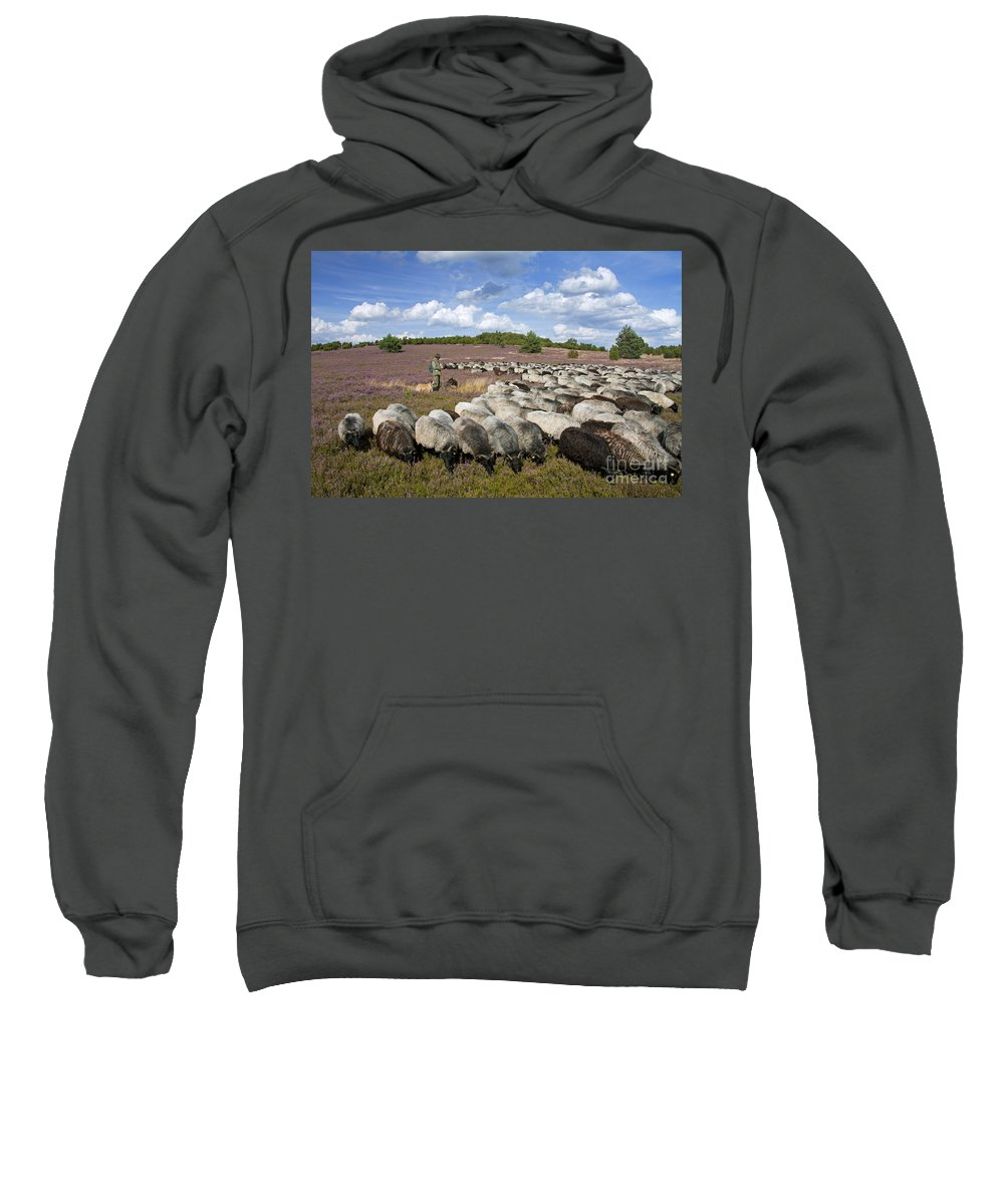 Heidschnucke Sweatshirt featuring the photograph 131114p162 by Arterra Picture Library