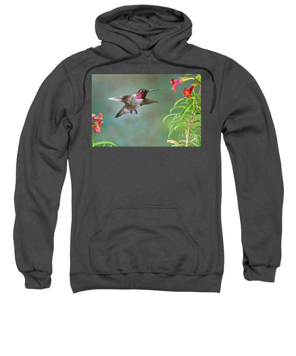 Animal Sweatshirt featuring the photograph Annas Hummingbird by Anthony Mercieca