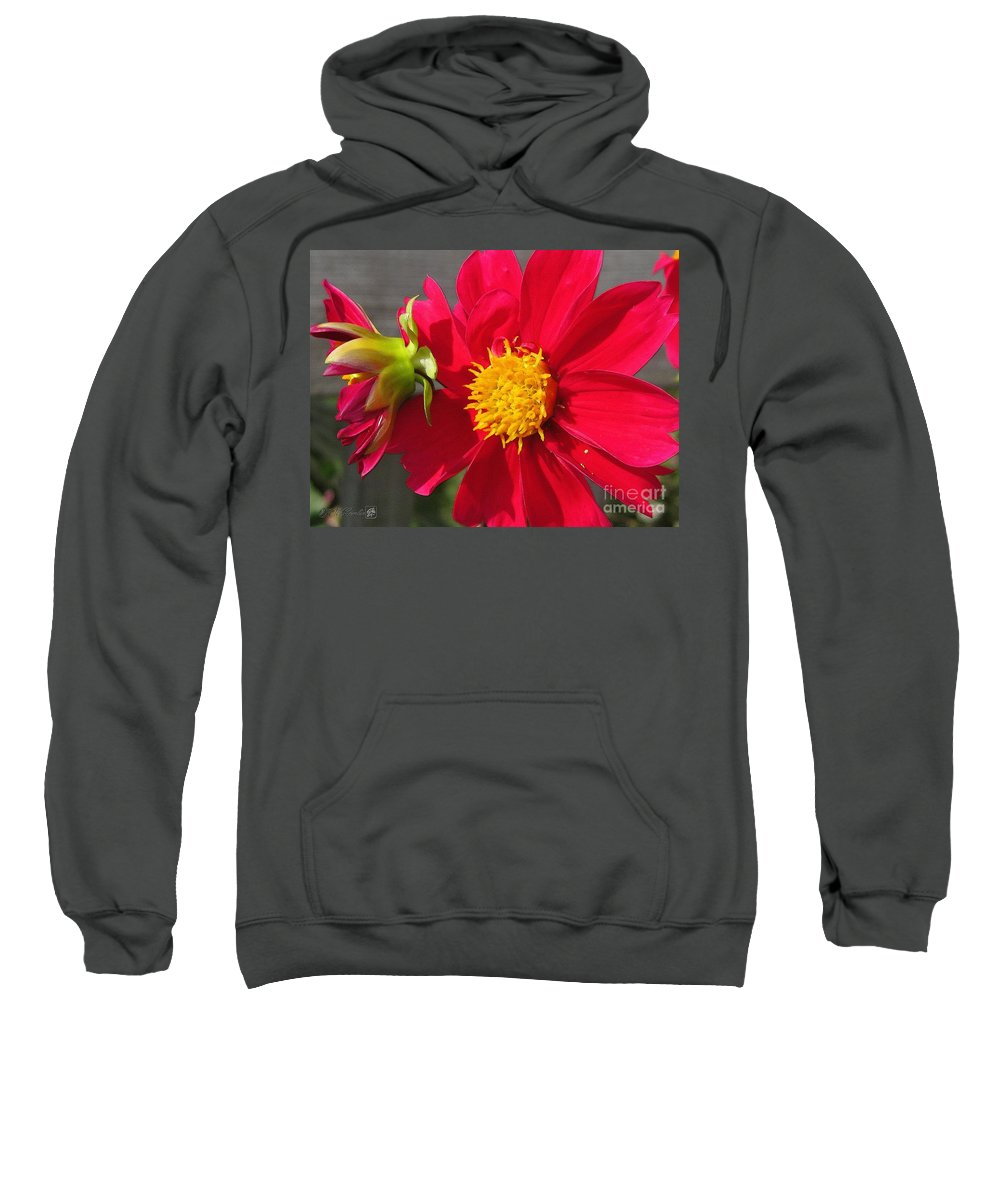 Dahlia Sweatshirt featuring the painting Dahlia From The Showpiece Mix by J McCombie