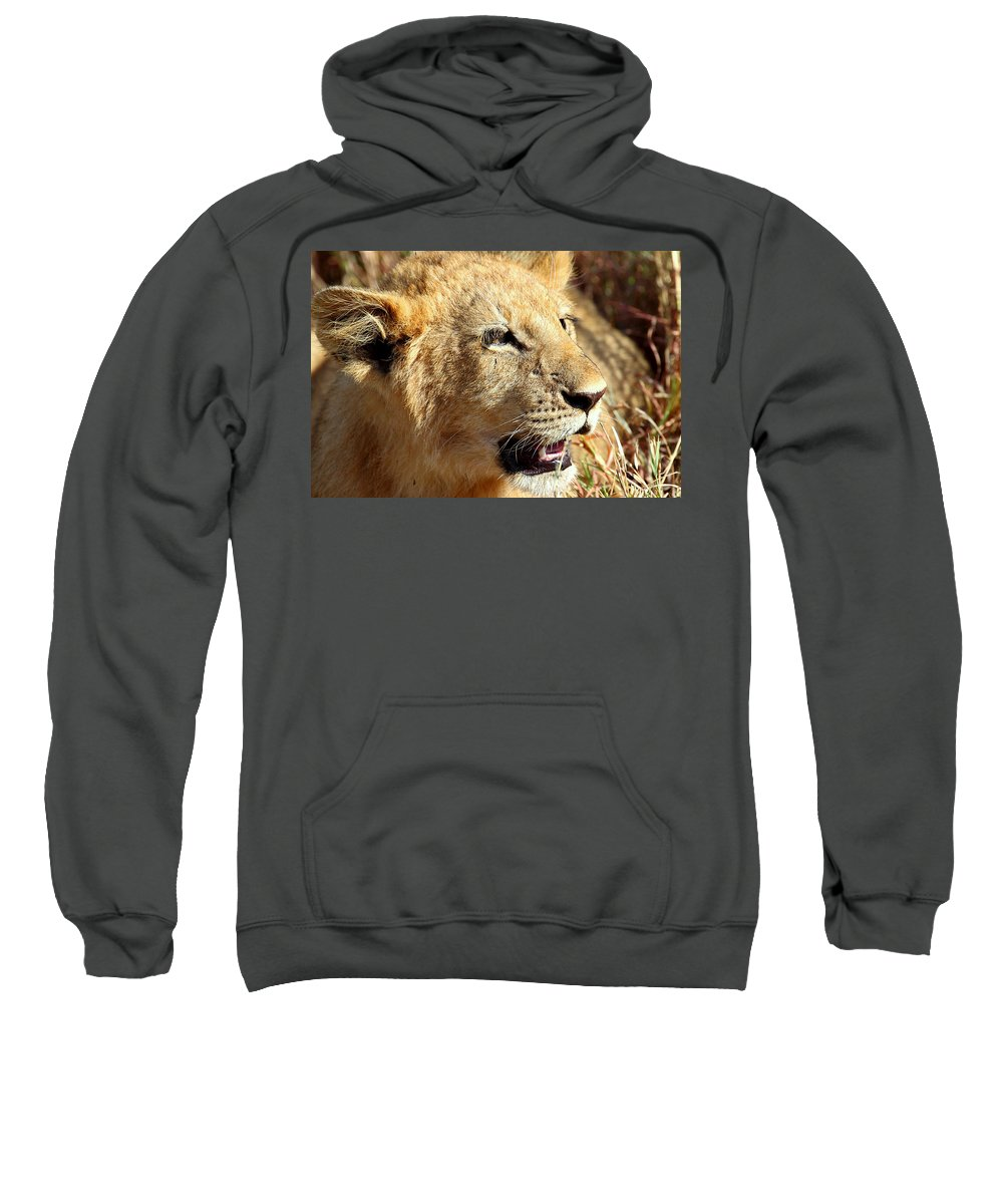 Lion Sweatshirt featuring the photograph African Lion Cub Portrait by Carole-Anne Fooks