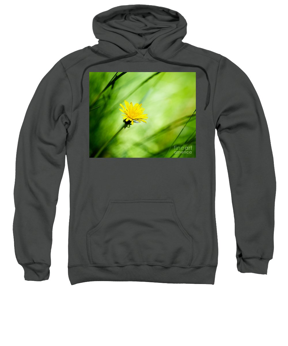 Flower Sweatshirt featuring the photograph Dandelion by Kati Finell
