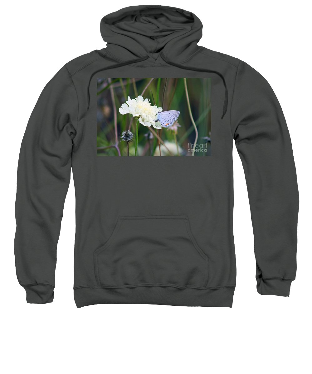Eastern Tailed Blue Sweatshirt featuring the photograph Eastern Tailed Blue Butterfly On Pincushion Flower by Karen Adams
