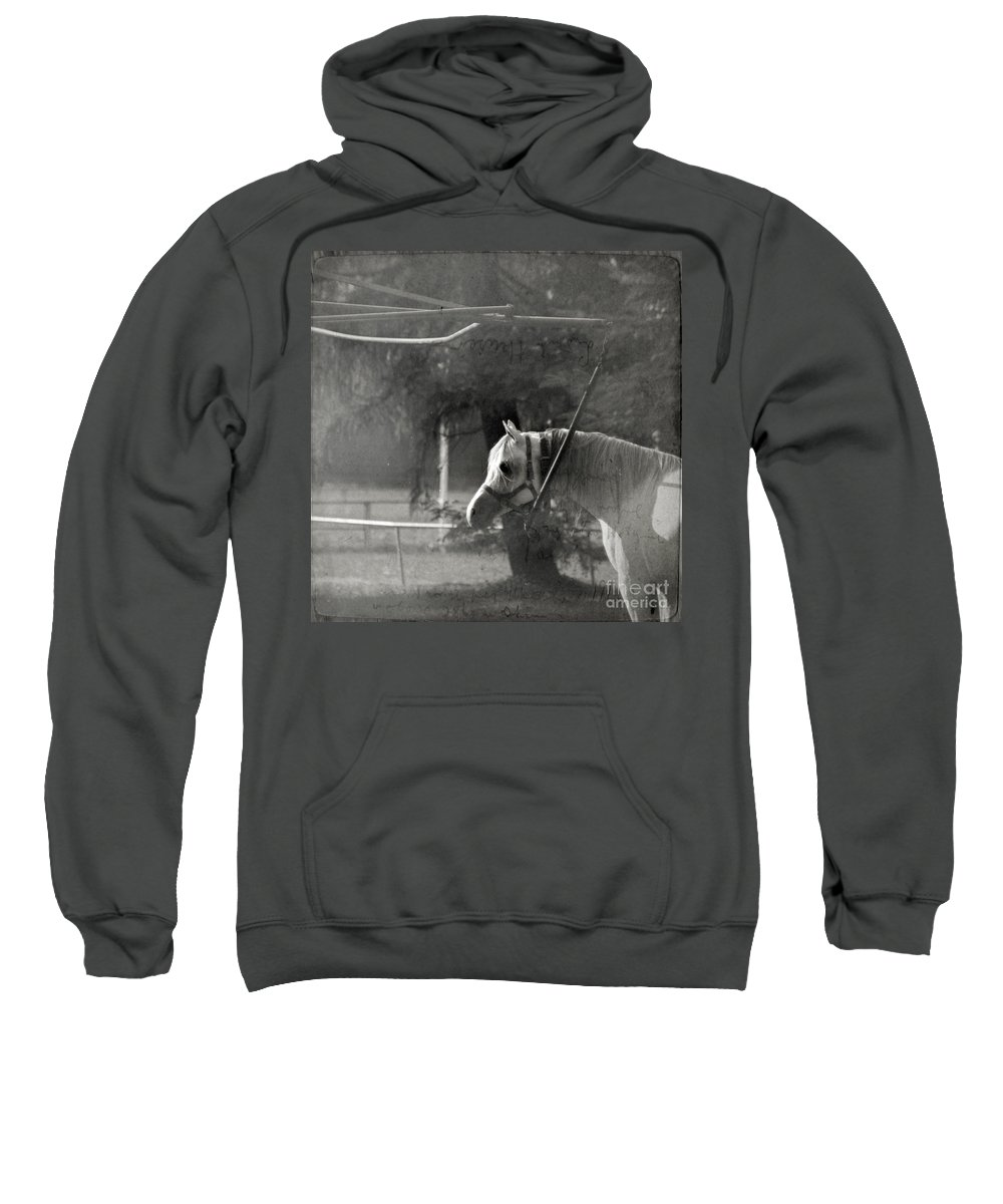 Horse Sweatshirt featuring the photograph In The Captivity by Angel Ciesniarska