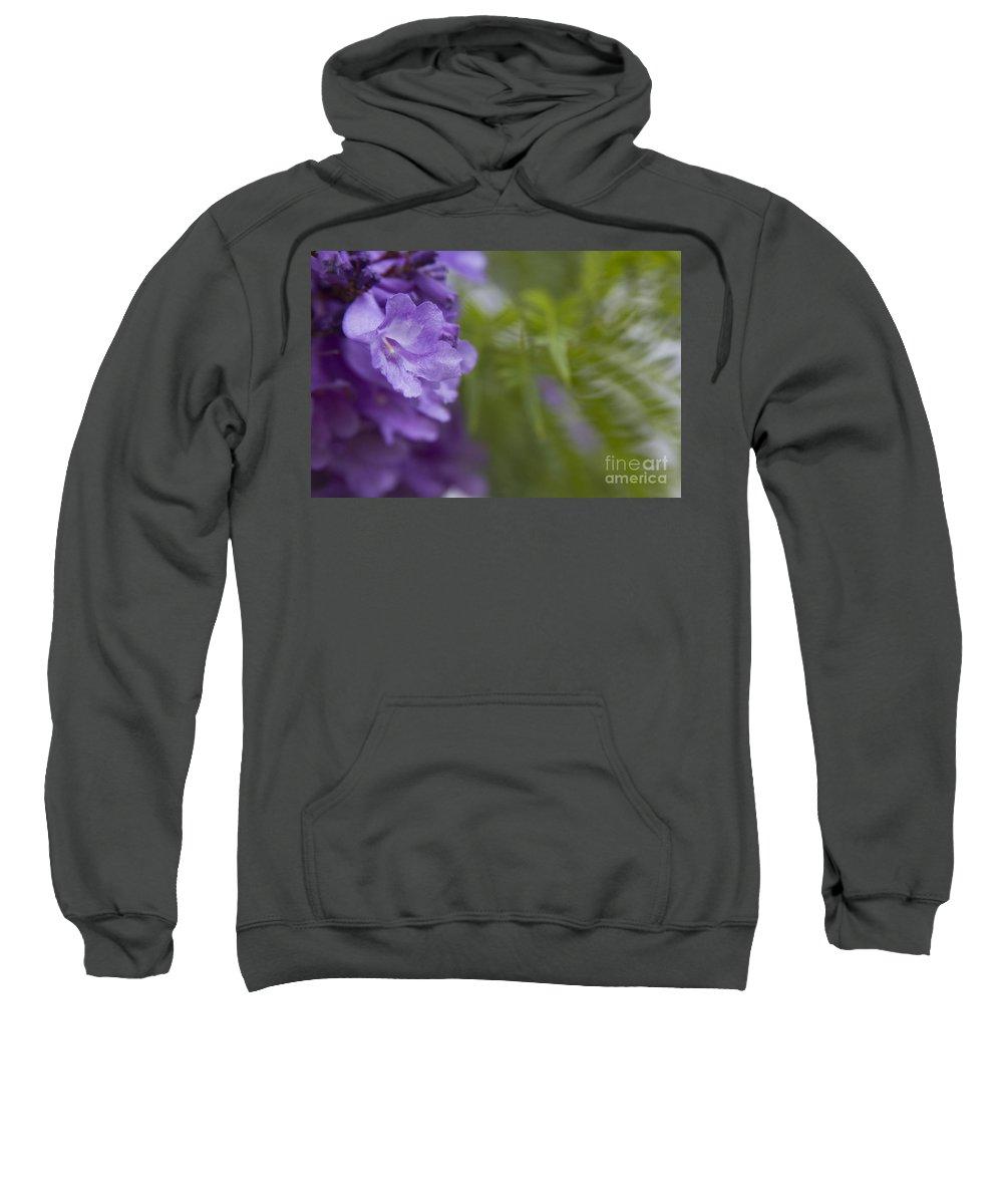 Sweatshirt featuring the photograph Jacaranda Mimosifolia Makawao Maui Hawaii by Sharon Mau