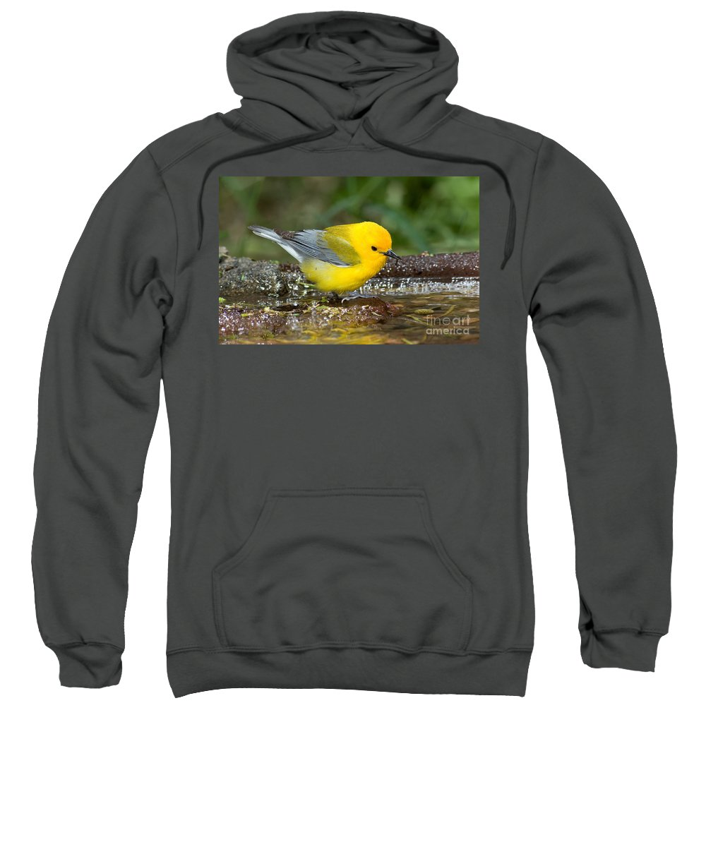 Prothonotary Warbler Sweatshirt featuring the photograph Prothonotary Warbler by Anthony Mercieca