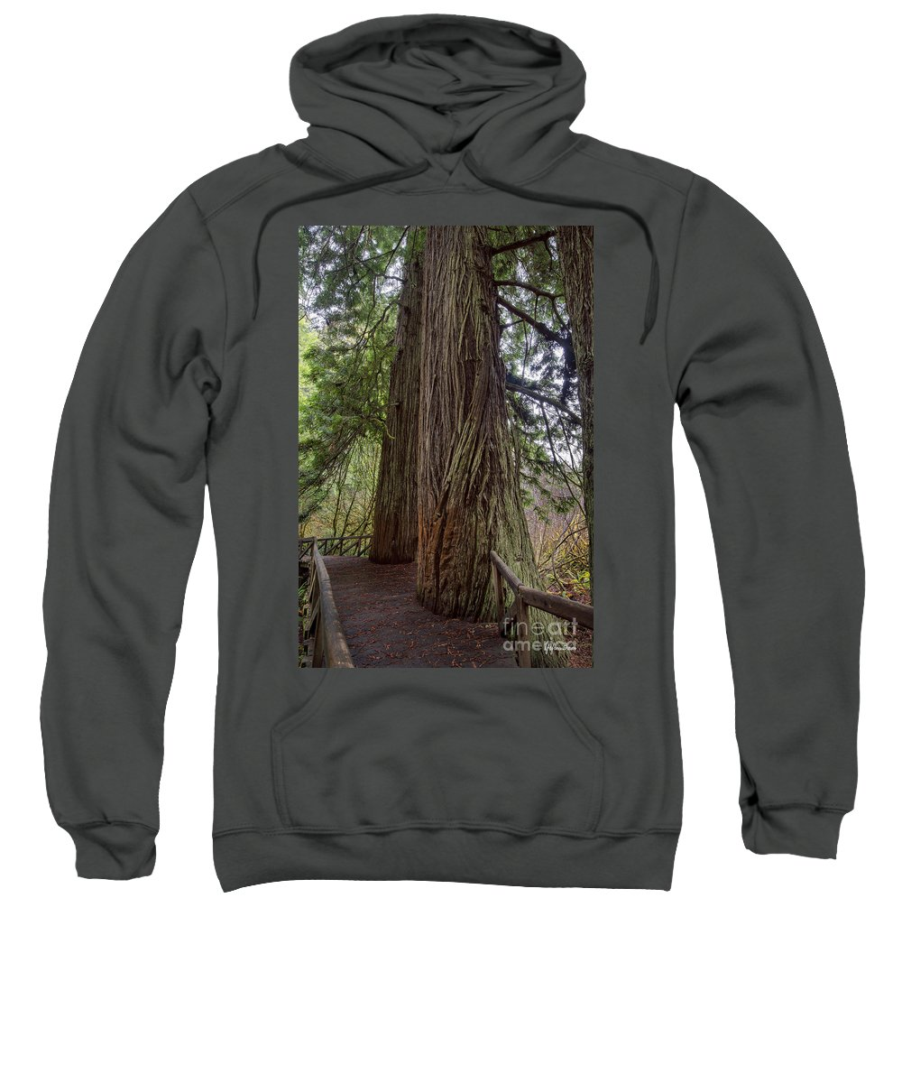 Redwood National Park Sweatshirt featuring the photograph Redwood by Yefim Bam