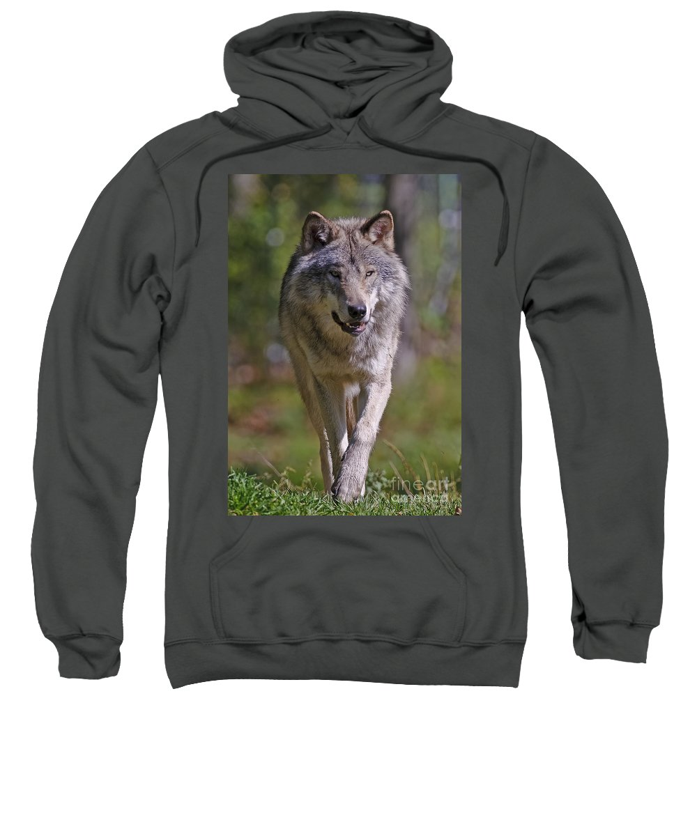 Timber Wolf Photography Sweatshirt featuring the photograph Timber Wolf by Wolves Only