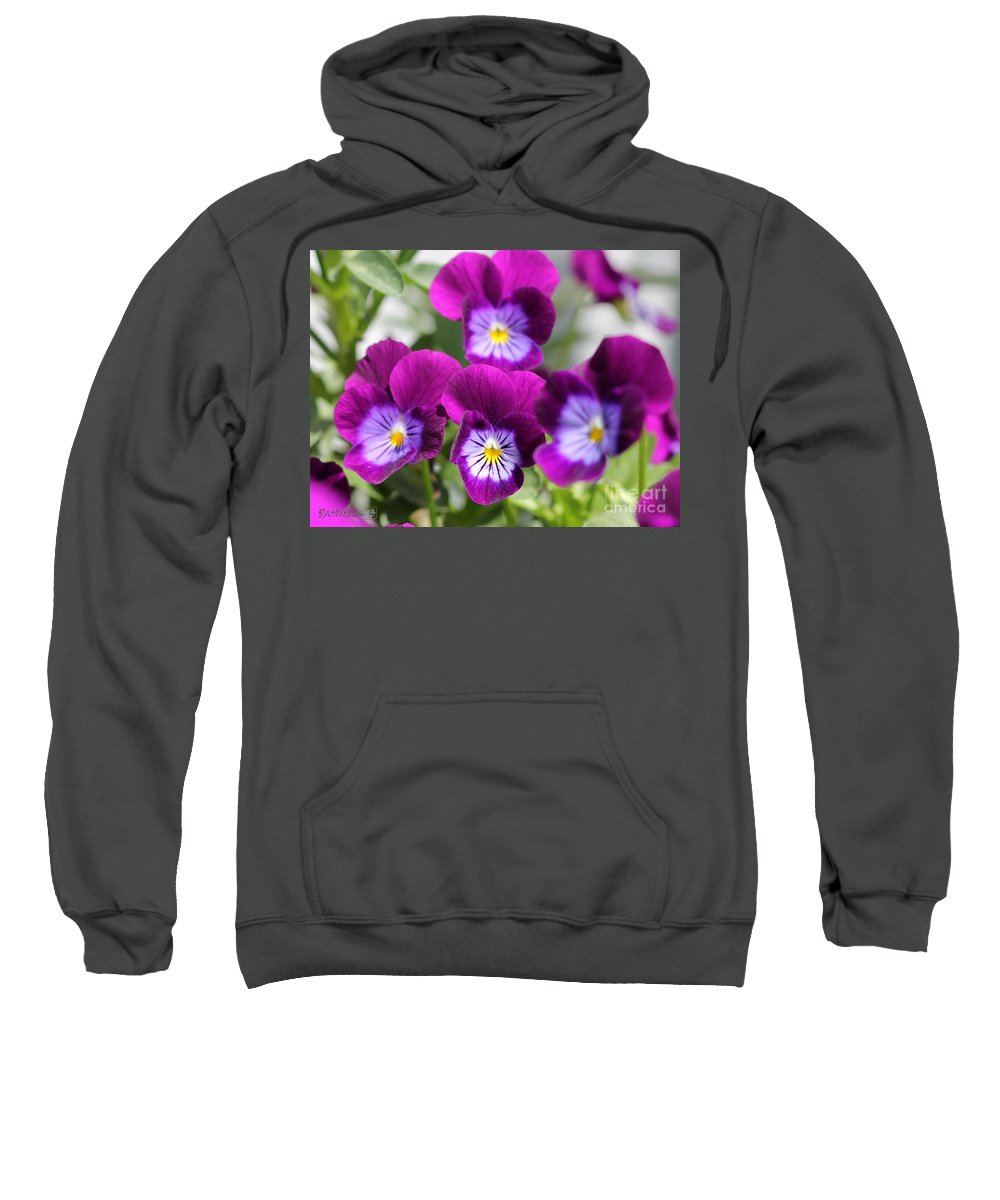 Mccombie Sweatshirt featuring the photograph Viola Named Sorbet Plum Velvet Jump-up by J McCombie