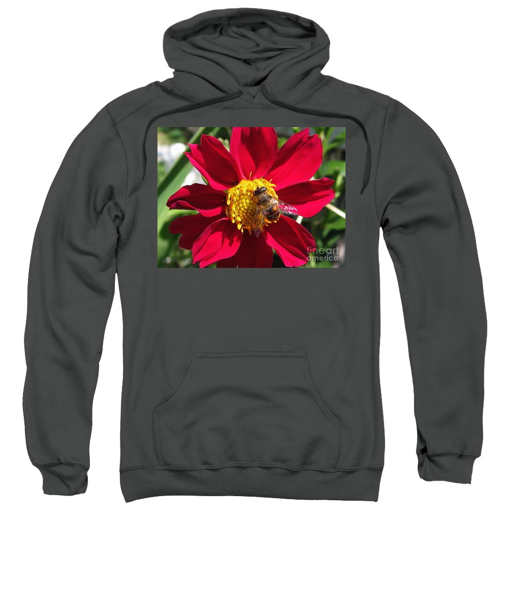 Mccombie Sweatshirt featuring the painting Dahlia From The Showpiece Mix by J McCombie