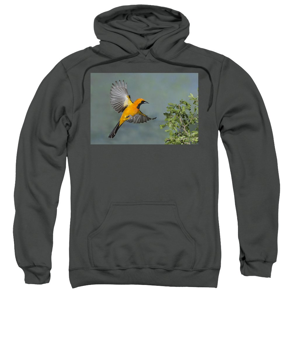 Hooded Oriole Sweatshirt featuring the photograph Hooded Oriole by Anthony Mercieca