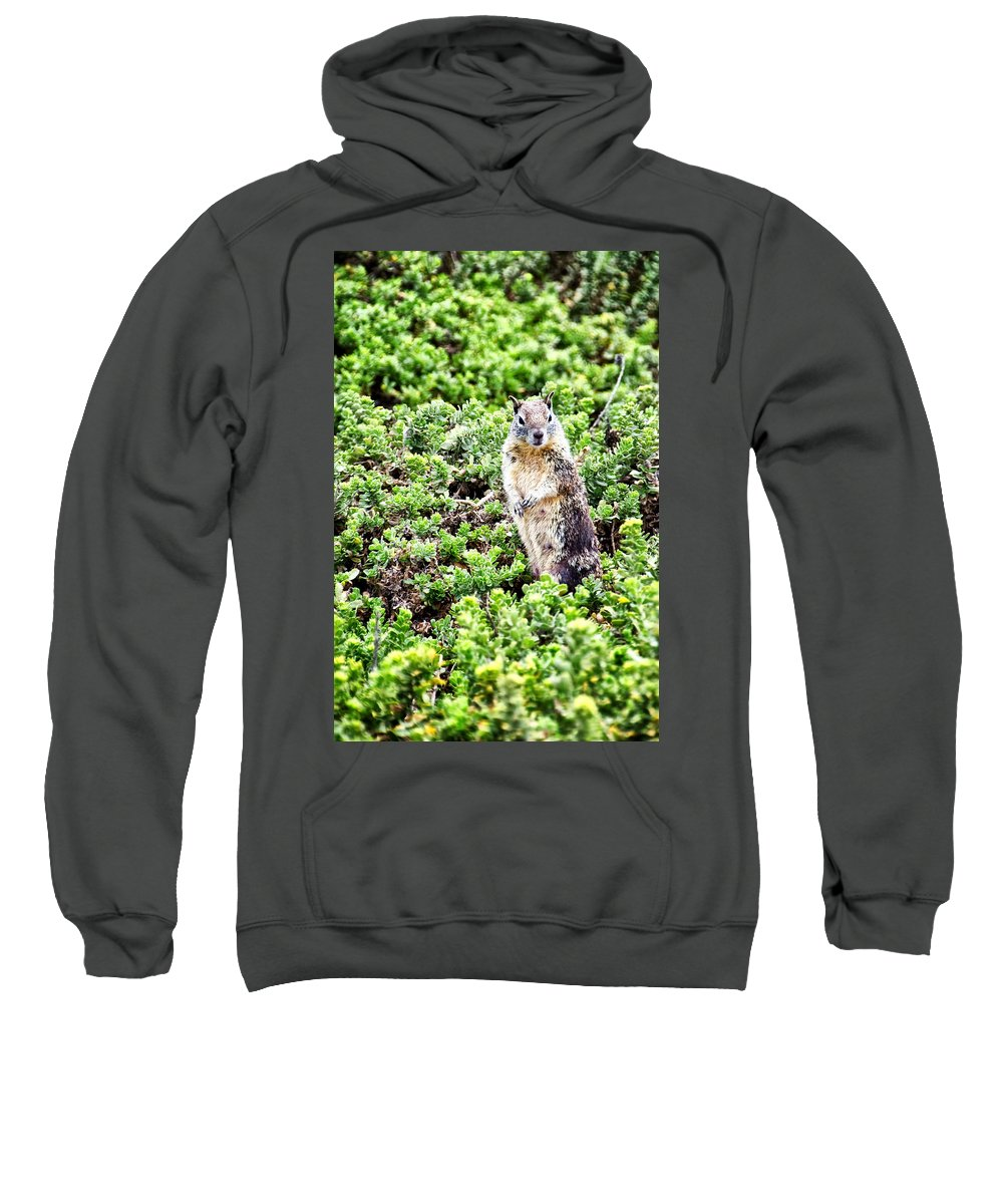 Squirrel Sweatshirt featuring the photograph I See You by Jon Berghoff