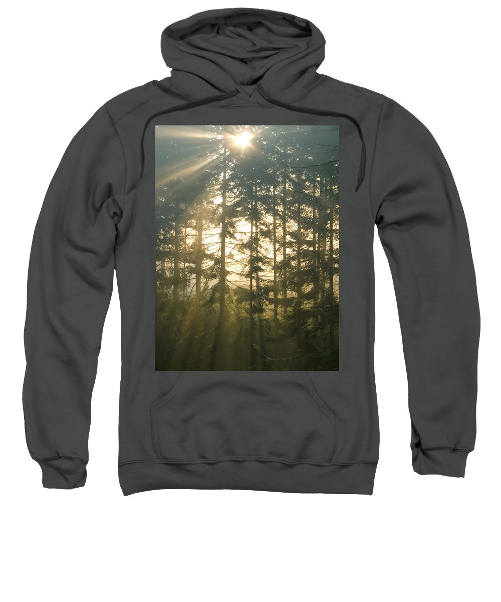 Nature Sweatshirt featuring the photograph Light In The Forest by Daniel Csoka