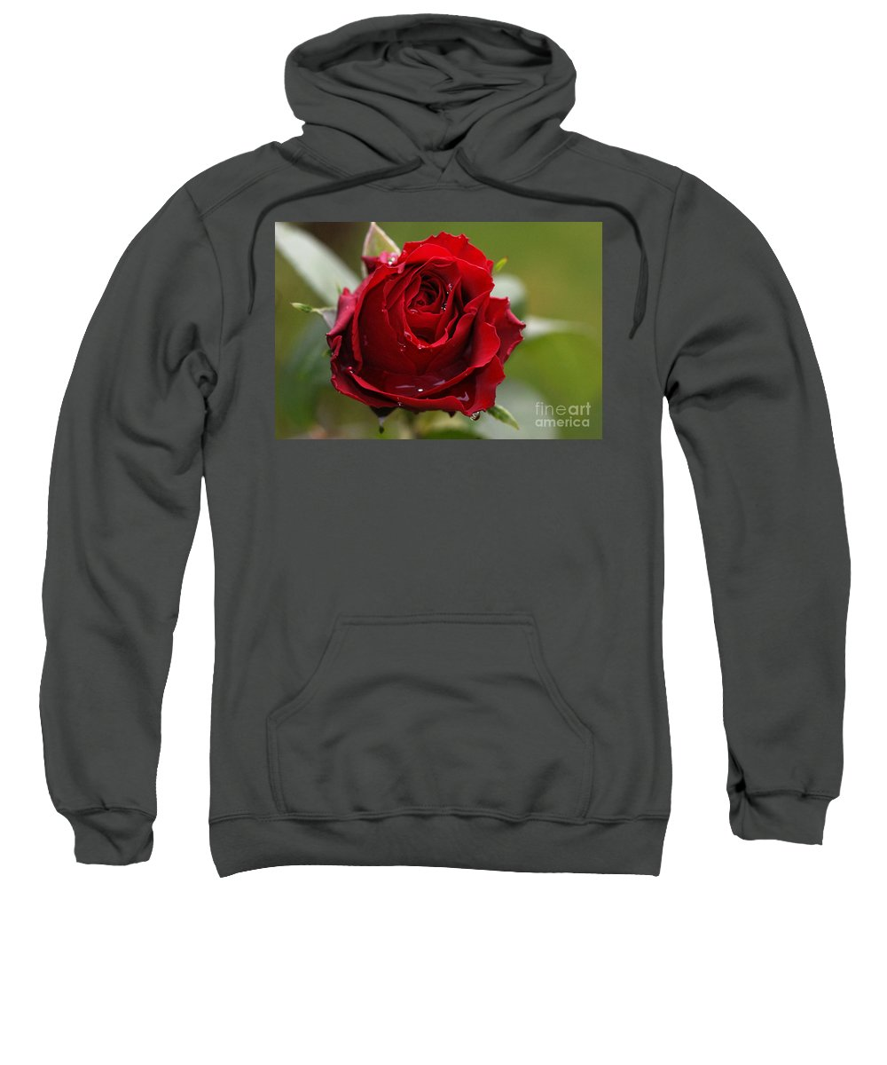 Red Sweatshirt featuring the photograph Red Rose by Carol Lynch