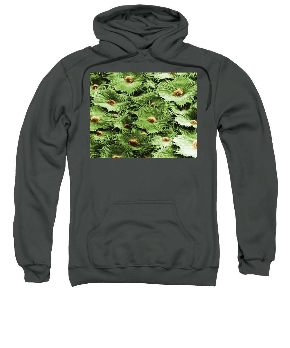 Science Sweatshirt featuring the photograph Russian Silverberry Leaf Sem by Asa Thoresen
