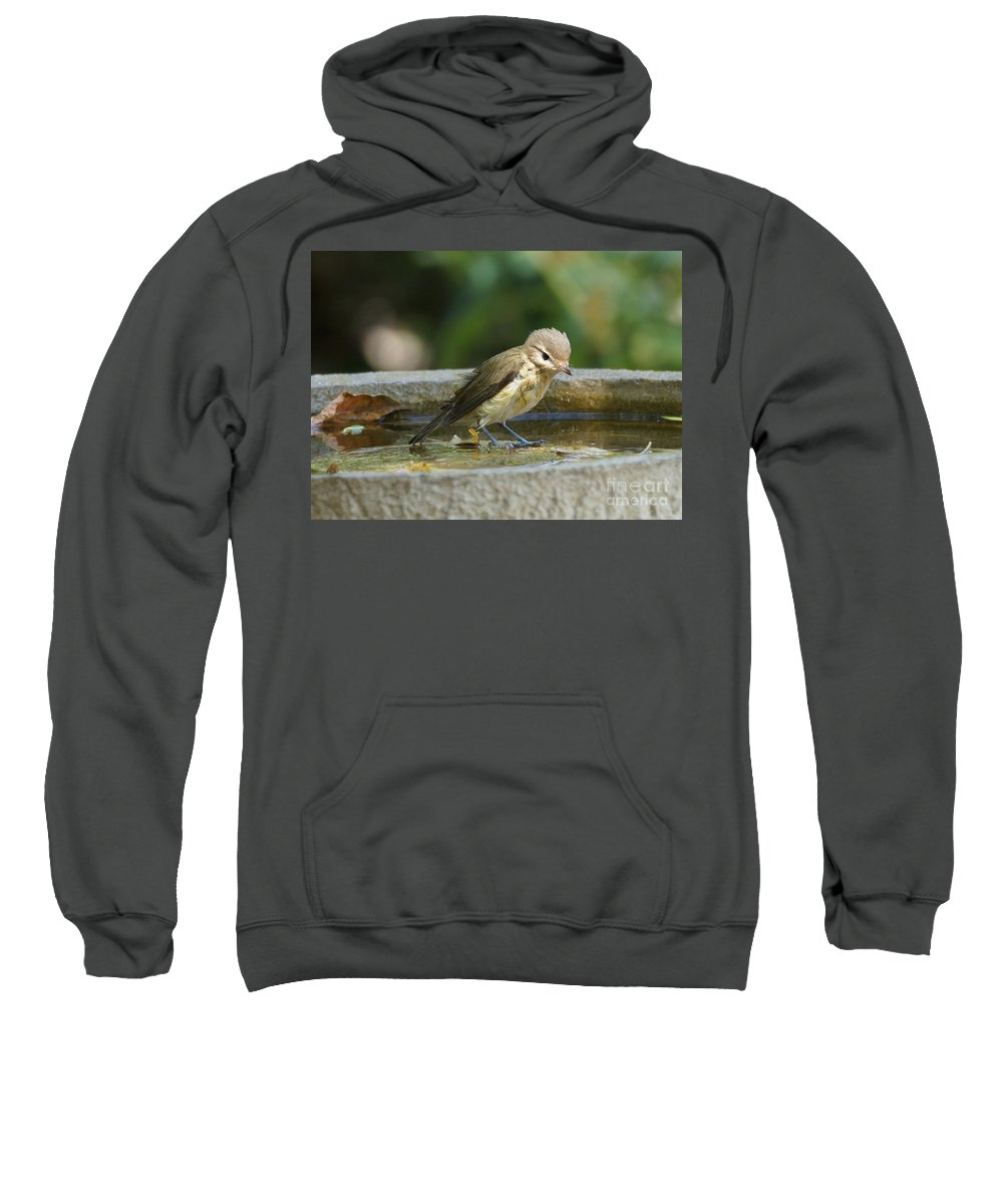 Warbling Vireo Sweatshirt featuring the photograph Warbling Vireo by Lori Tordsen