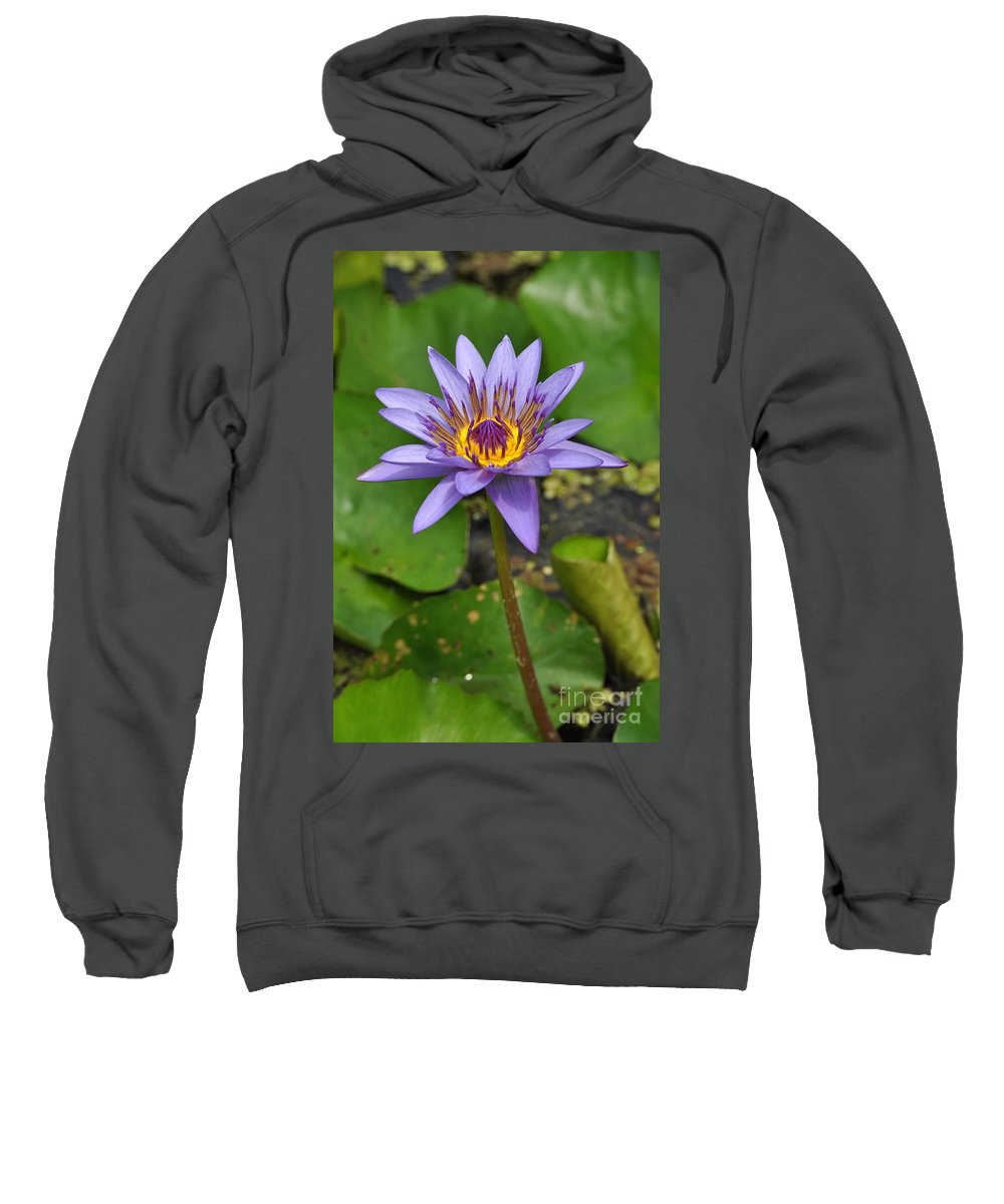 Water Lillies Sweatshirt featuring the photograph Water Lily 9 by Allen Beatty