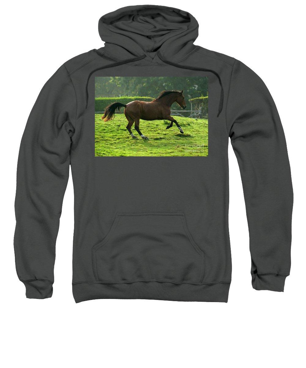 Horse Sweatshirt featuring the photograph Bay Horse by Angel Ciesniarska