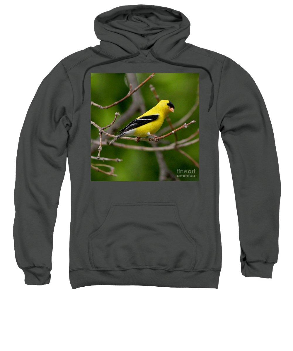 Finch Sweatshirt featuring the photograph Gold Finch by Lori Tordsen
