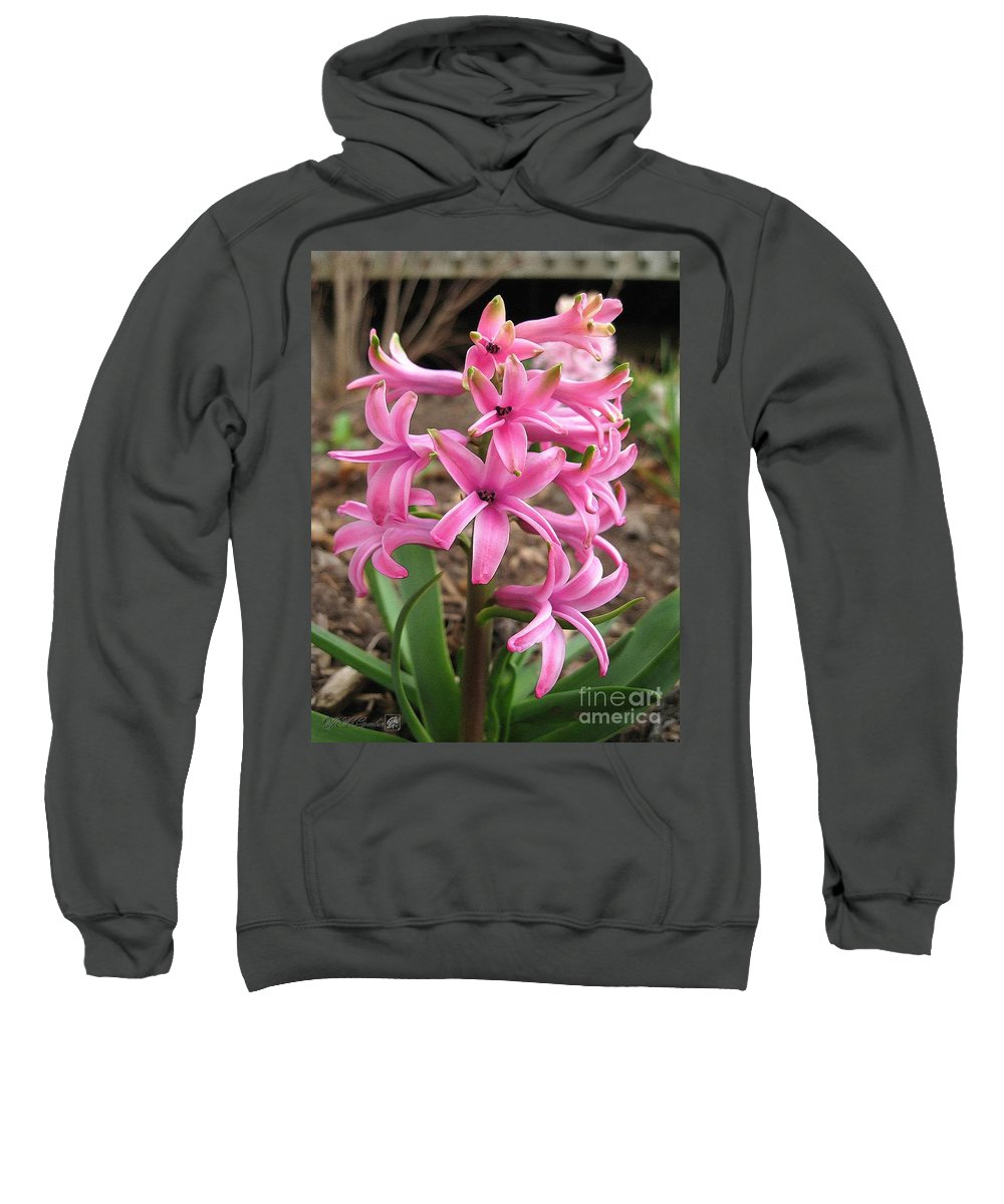 Hyacinth Sweatshirt featuring the painting Hyacinth Named Pink Pearl by J McCombie