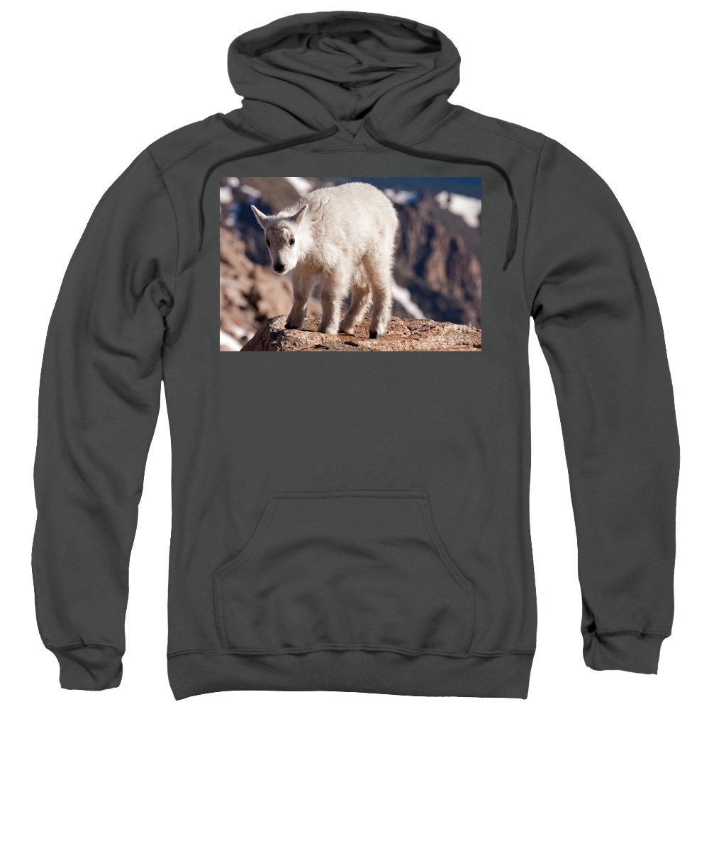 Arapaho National Forest Sweatshirt featuring the photograph Mountain Goat Kid On Mount Evans by Fred Stearns