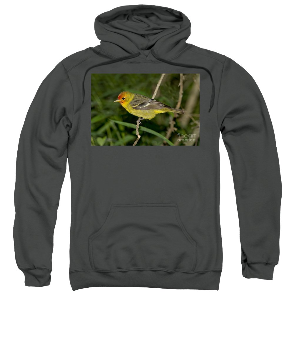 Western Tanager Sweatshirt featuring the photograph Western Tanager by Anthony Mercieca