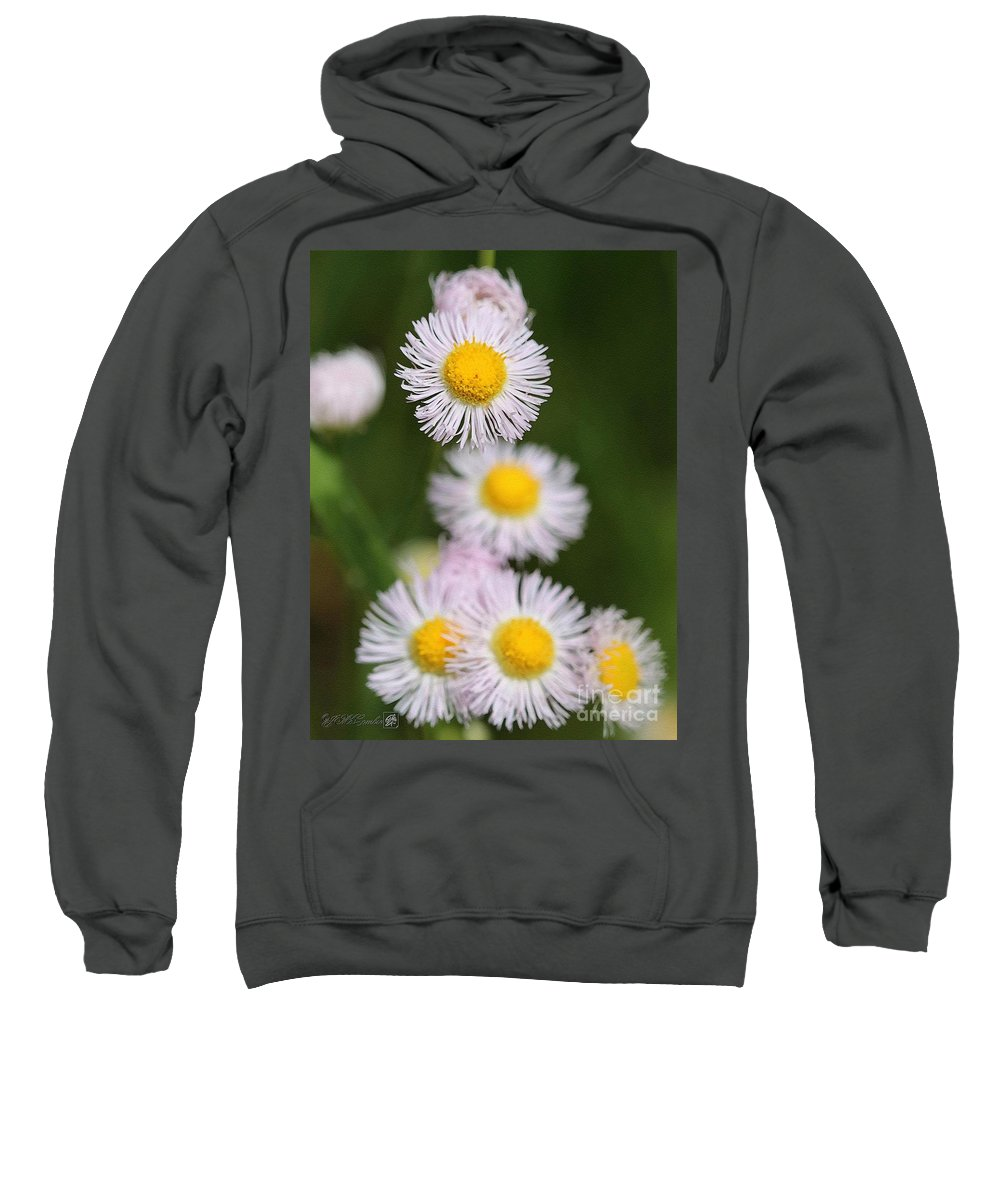 Jem.fine.arts Sweatshirt featuring the painting Wildflower Named Robin's Plantain by J McCombie
