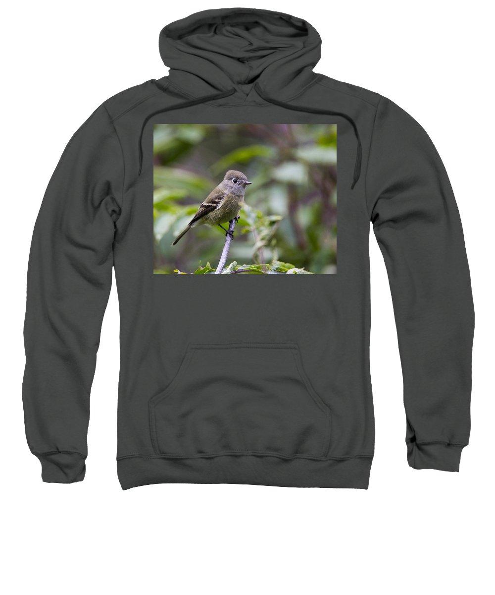 Doug Lloyd Sweatshirt featuring the photograph Alder Flycatcher by Doug Lloyd
