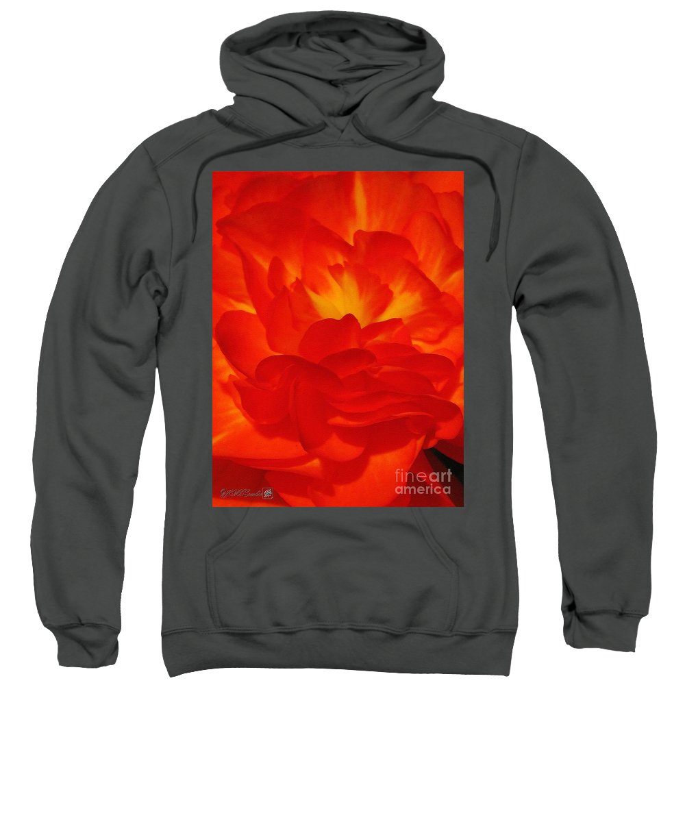 Begonia Sweatshirt featuring the painting Begonia Named Nonstop Apricot by J McCombie