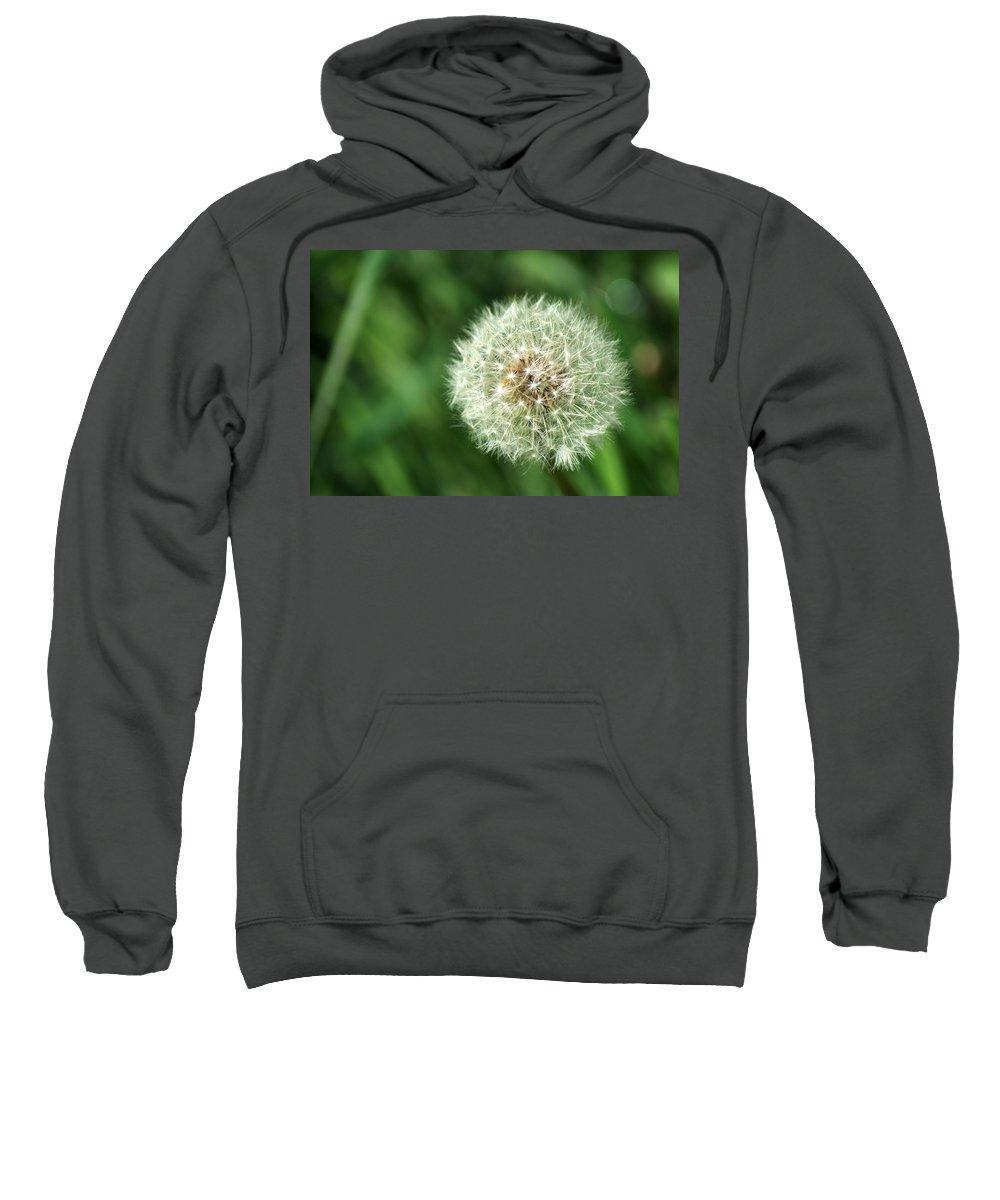 Dandelion Sweatshirt featuring the photograph Dandelion Seed Head by Chris Day