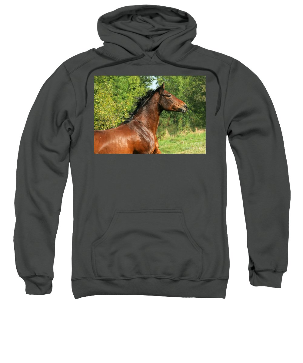 Horse Sweatshirt featuring the photograph The Bay Horse by Angel Ciesniarska
