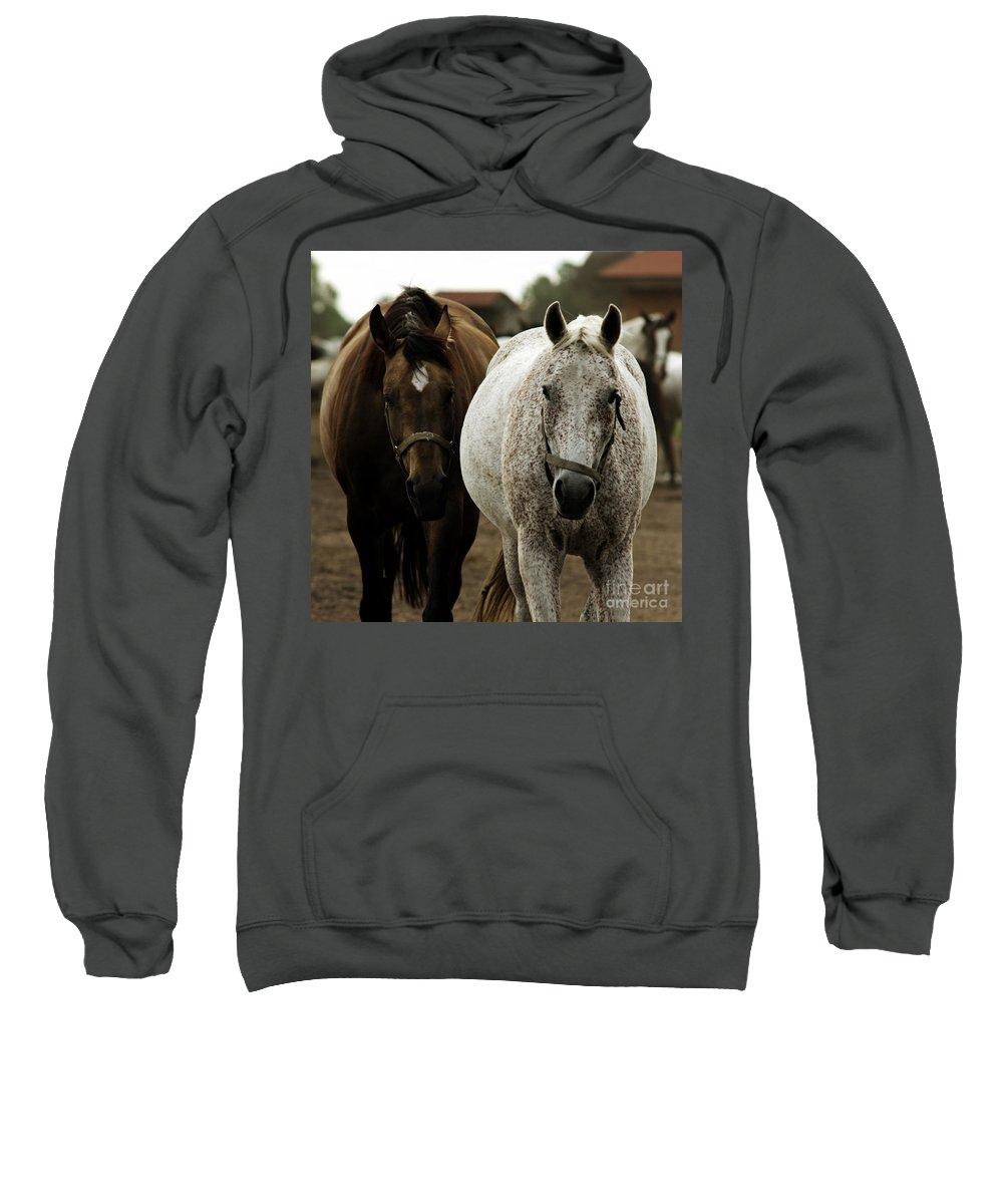 Horse Sweatshirt featuring the photograph Horses by Angel Ciesniarska
