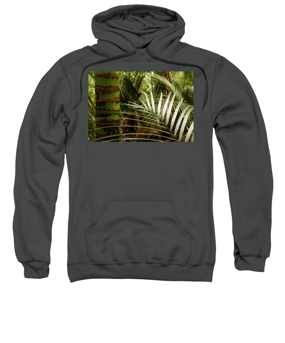 Palm Sweatshirt featuring the photograph Tropical Forest by Les Cunliffe