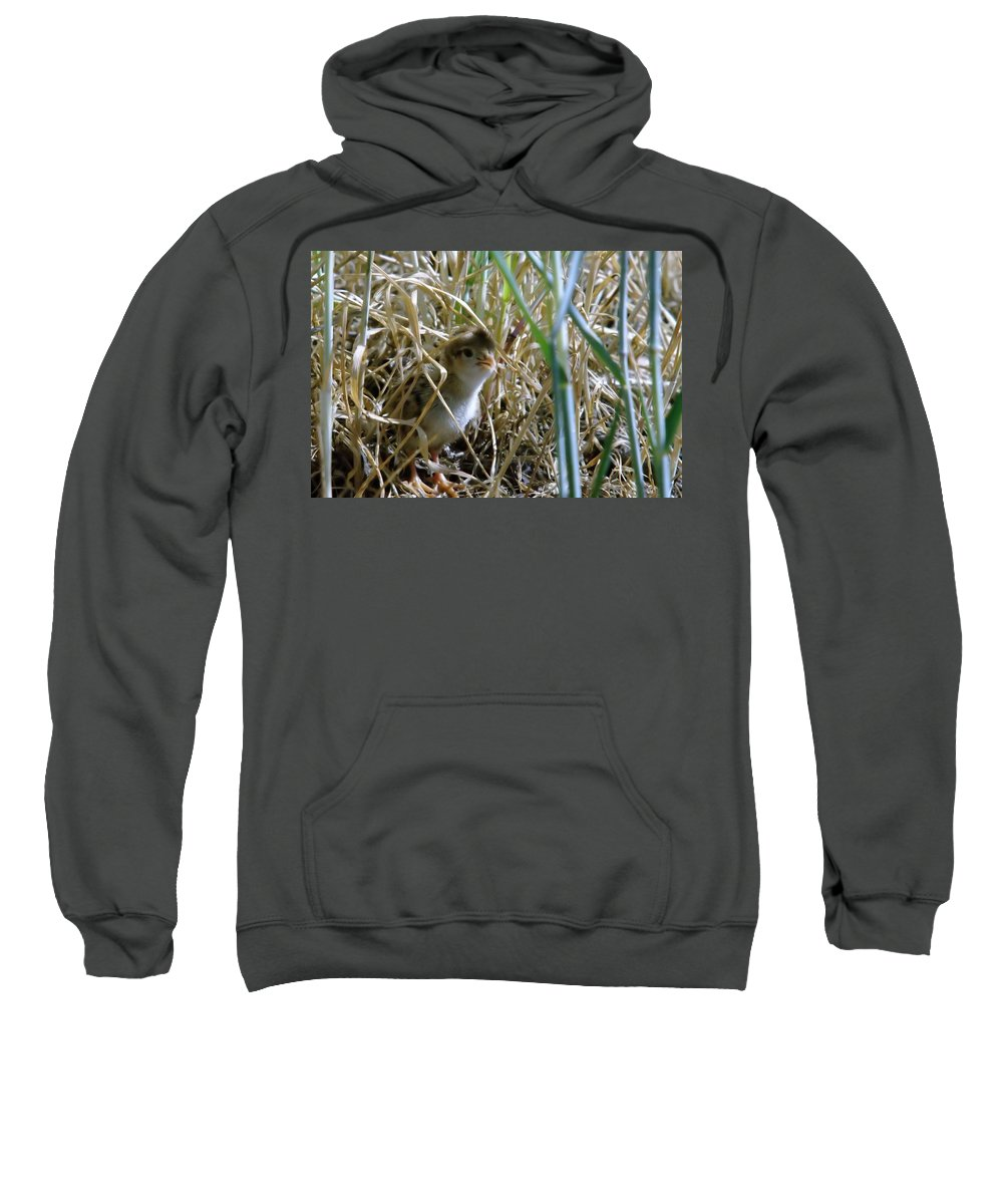 Wildlife Sweatshirt featuring the photograph A Baby Quail Looks Back by Jeff Swan