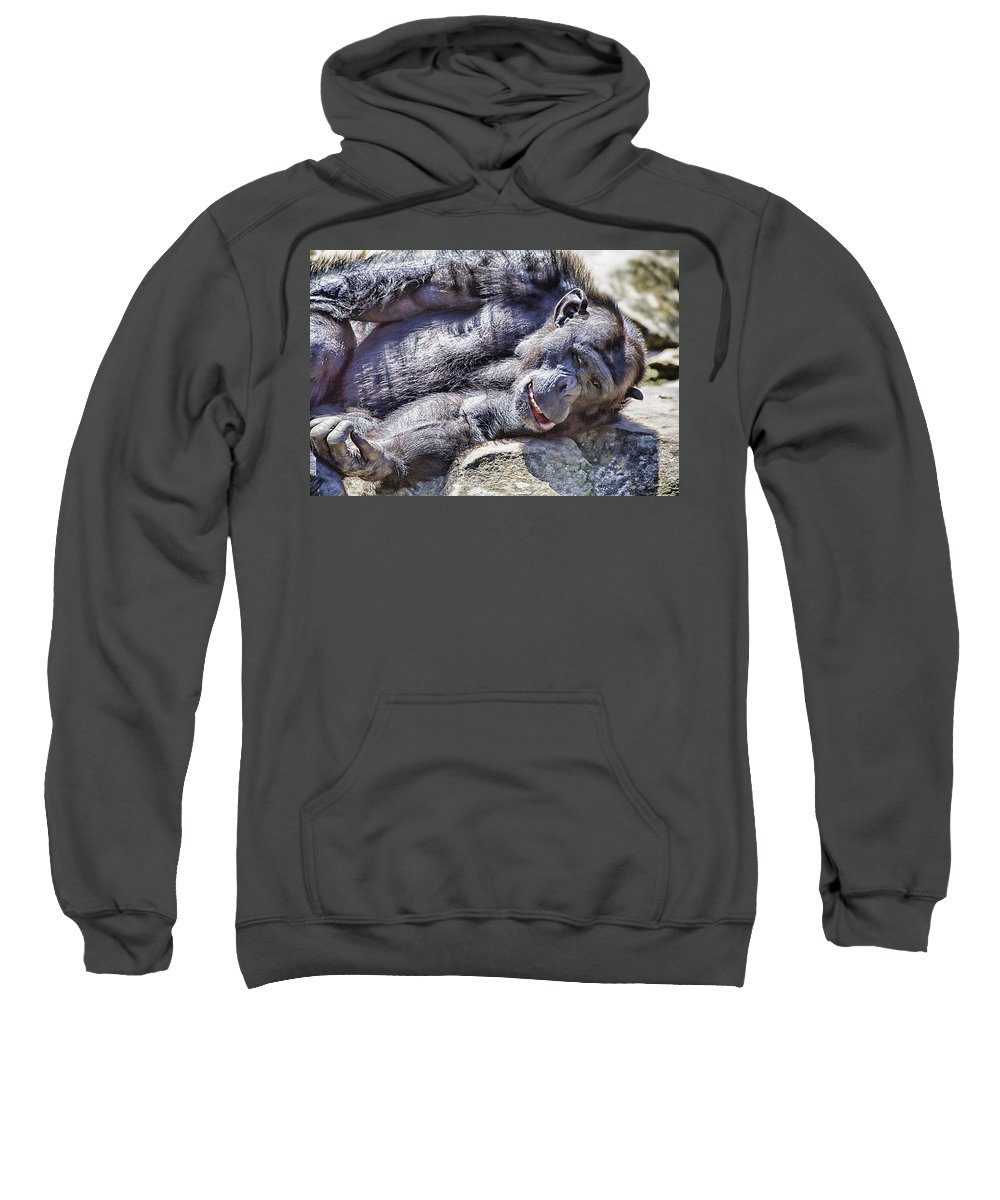 Chimpanzees Sweatshirt featuring the photograph A Bit Like Us V3 by Douglas Barnard