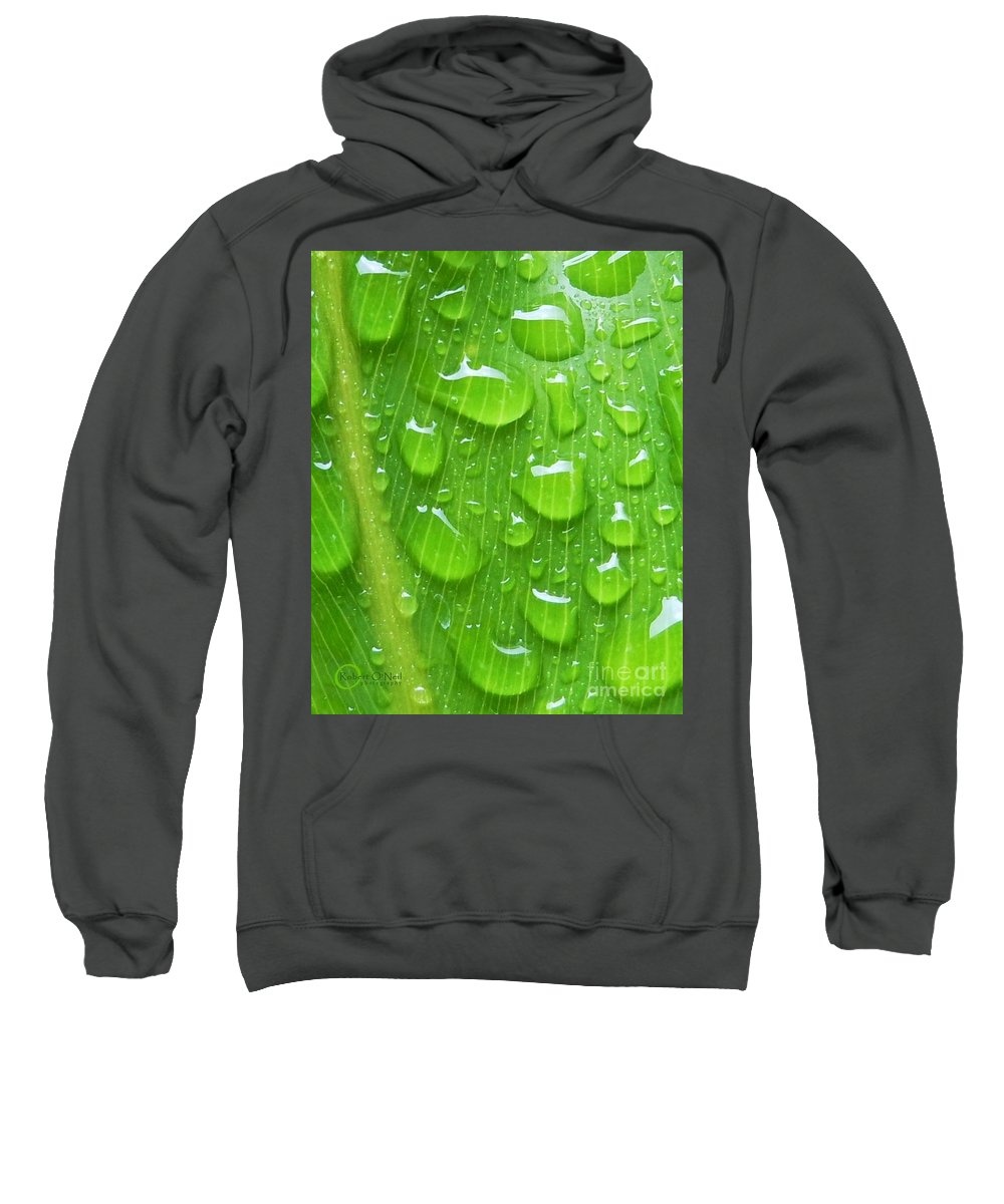 Plant Sweatshirt featuring the photograph A Cleansing Morning Rain by Robert ONeil