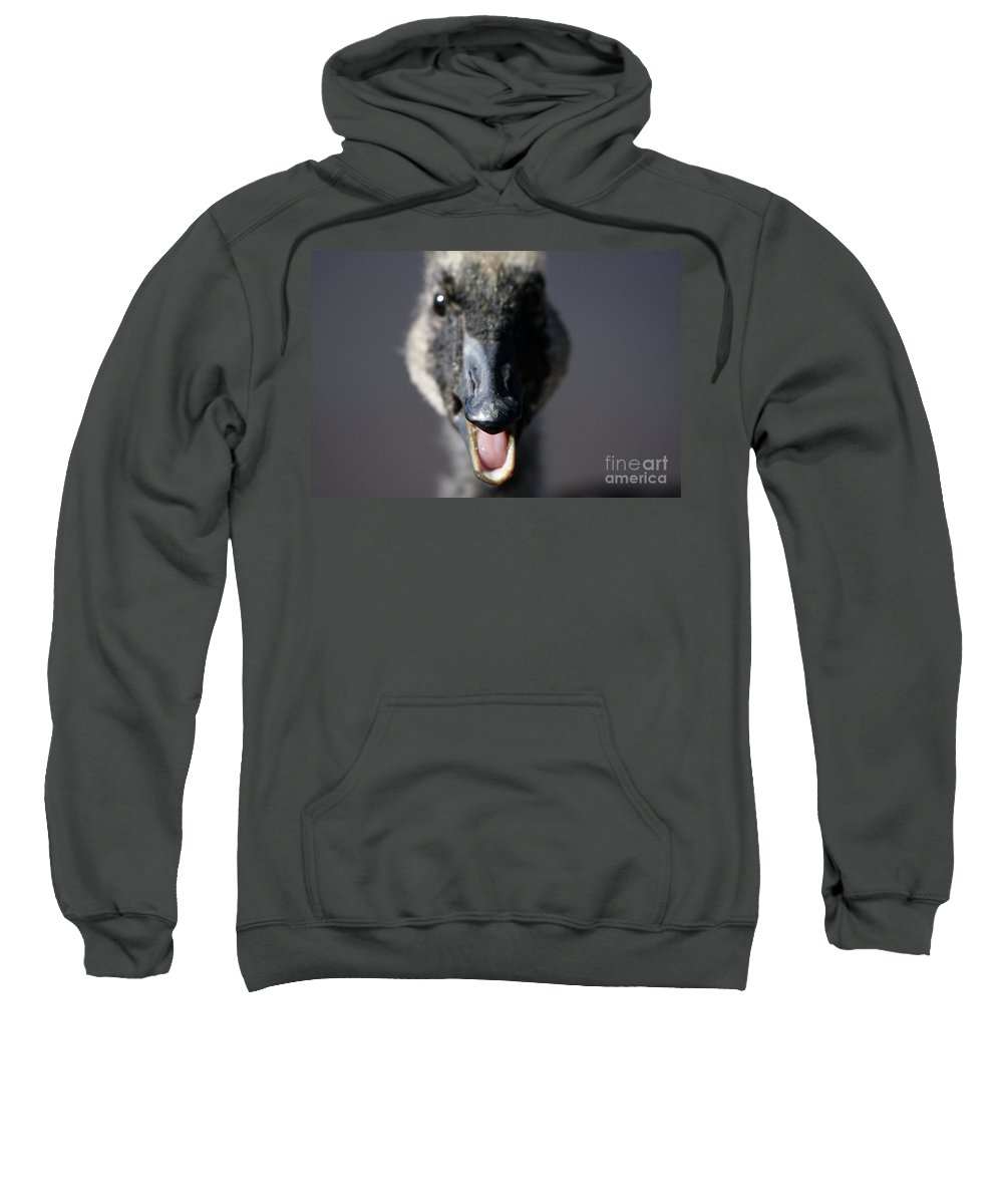 Canada Goose Sweatshirt featuring the photograph A Real Closeup by Karol Livote