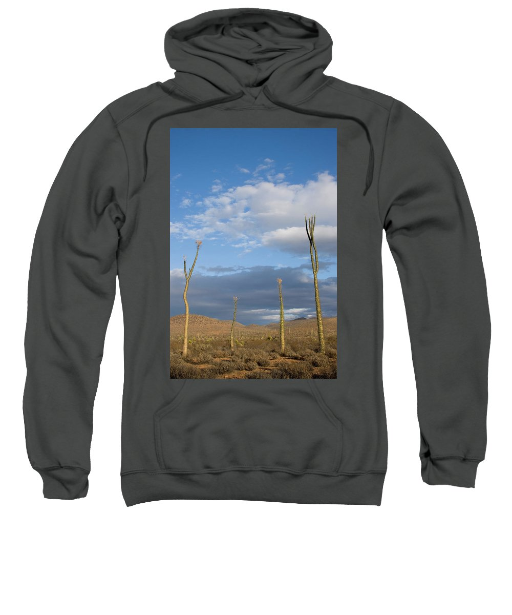 Cloudscape Sweatshirt featuring the photograph A Small Group Of Cirio Or Boojum Trees by Woods Wheatcroft
