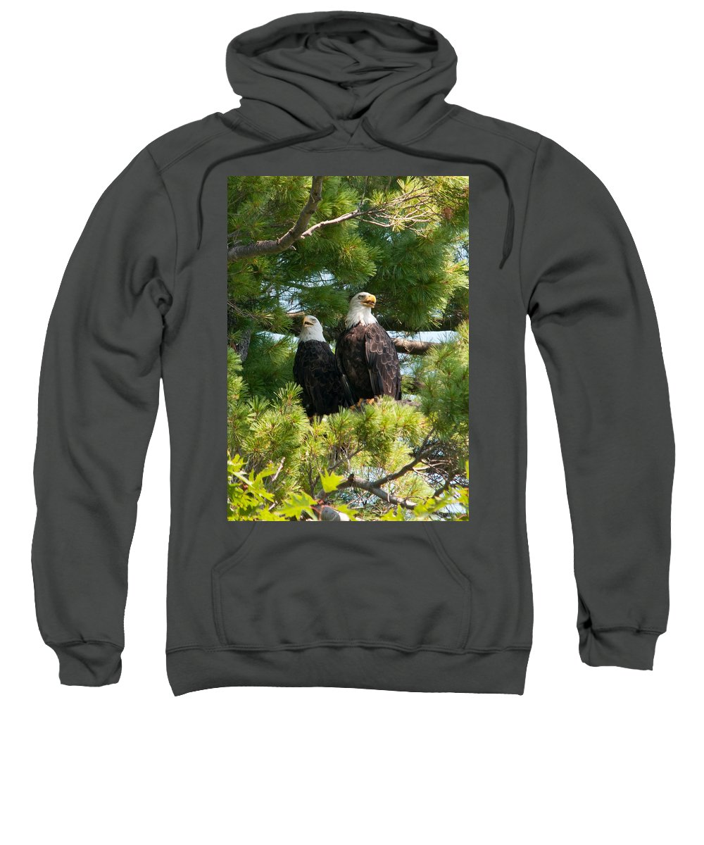 Bald Eagle Sweatshirt featuring the photograph A Watchful Pair by Brenda Jacobs