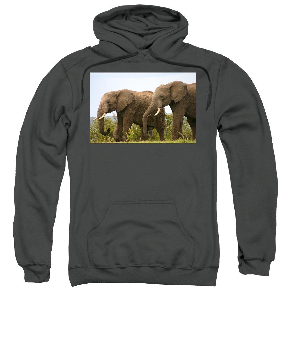 Elephant Sweatshirt featuring the photograph African Elephants by Menachem Ganon