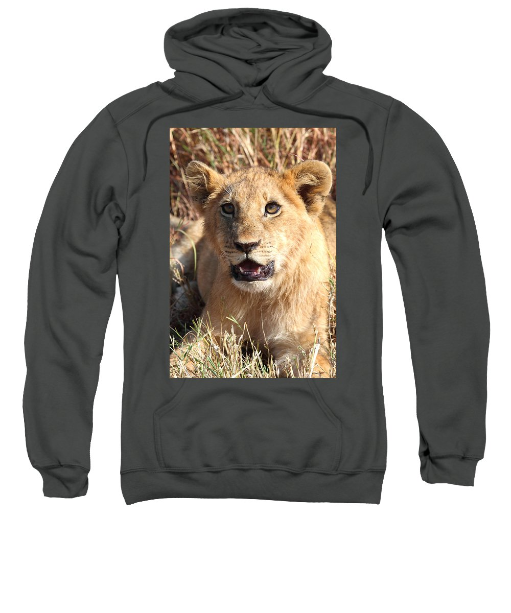 Lion Sweatshirt featuring the photograph African Lion Cub Resting by Carole-Anne Fooks