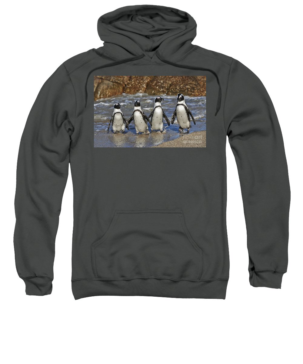 Farbaufnahme Sweatshirt featuring the photograph African Penguin by Juergen Ritterbach