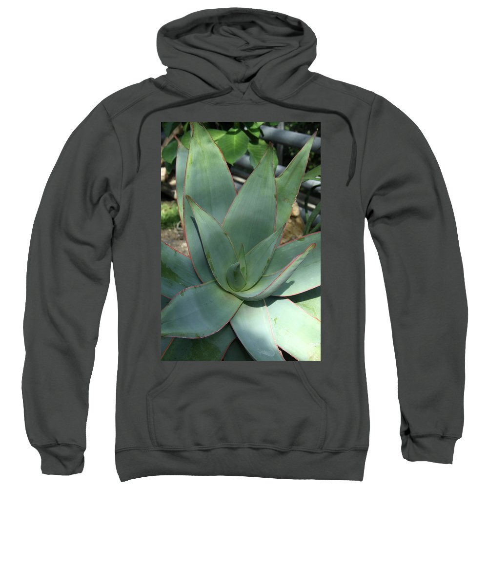 Agave Sweatshirt featuring the photograph Agave by Christiane Schulze Art And Photography