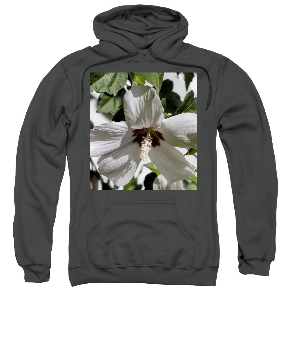 Swamp Rose Mallow Sweatshirt featuring the photograph Alabama Wildflower - Swamp Rose Mallow by Kathy Clark