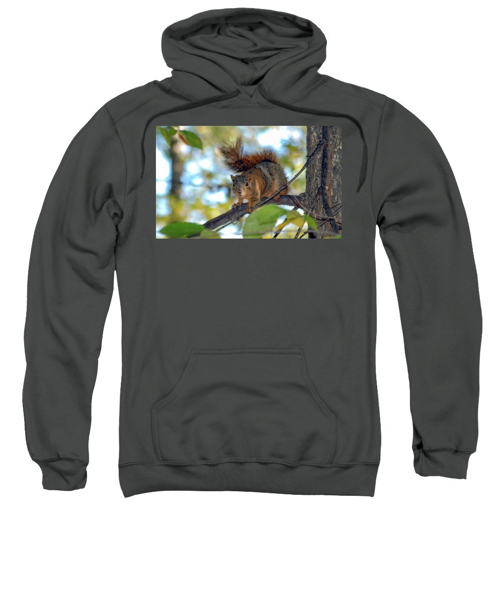 Squirrel Sweatshirt featuring the photograph Alarmed by Optical Playground By MP Ray